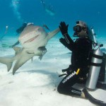 Hi five shark