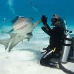 Hi five shark