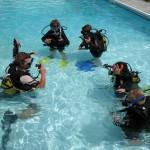 Bubblemaker study together Alpha Divers