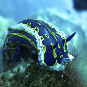 Beautiful adventure with Alpha Divers-nudibranch