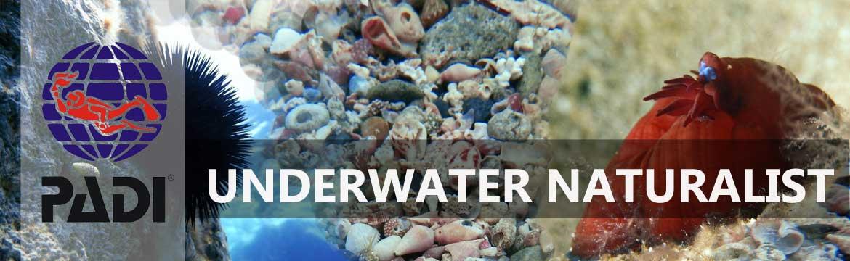 Underwater naturalist specialty Alpha Divers Larnaca Cyprus
