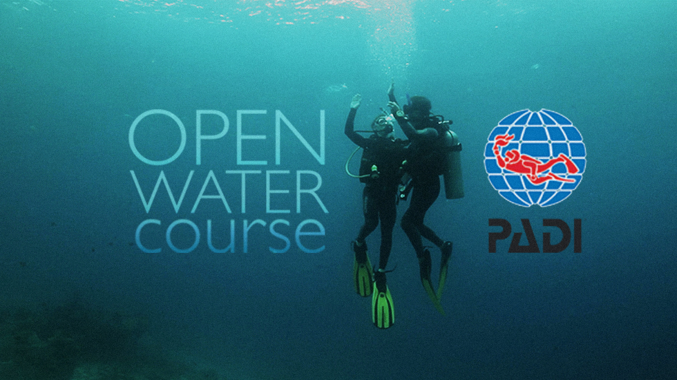 Open Water course with Alpha Divers